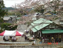 ippuku-zentai-sakura.jpg